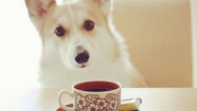 Hunde Bilder Schwarz Weiß Für Facebook 390x220 - Hunde Bilder Schwarz Weiß Für Facebook