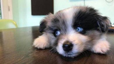 Hunde Bilder Schwarz Weiß Kostenlos Herunterladen 390x220 - Hunde Bilder Schwarz Weiß Kostenlos Herunterladen