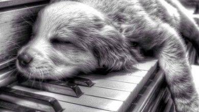 Hunde Bilder Sprüche Für Facebook 390x220 - Hunde Bilder Sprüche Für Facebook
