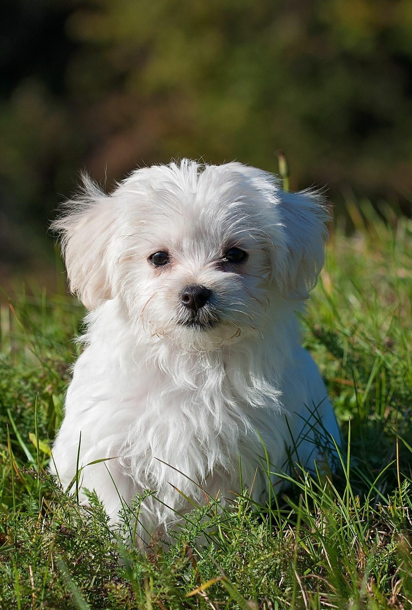 Hunde Bilder Sprüche Kostenlos Bilder Und Sprüche Für