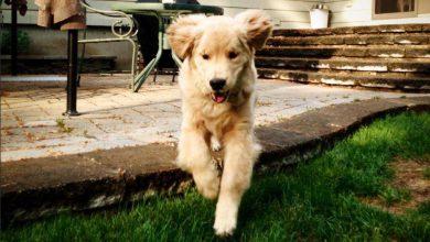 Hunde Bilder Welpen 390x220 - Hunde Bilder Welpen