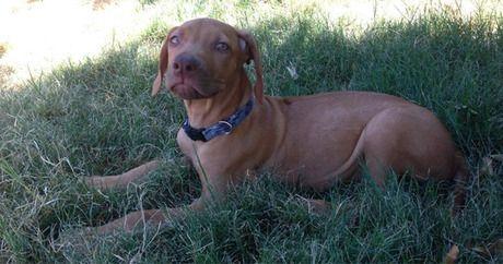 Hunde Bilder Welpen Kostenlos Herunterladen - Hunde Bilder Welpen Kostenlos Herunterladen