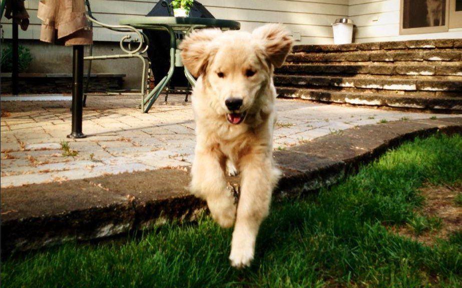 Hunde Bilder Welpen - Hunde Bilder Welpen