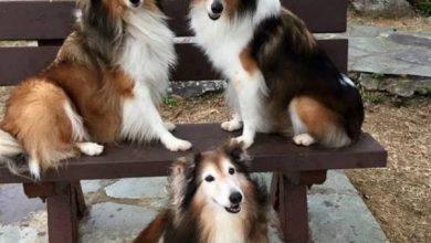 Hunde Bilder Witzig Für Facebook 390x220 - Hunde Bilder Witzig Für Facebook