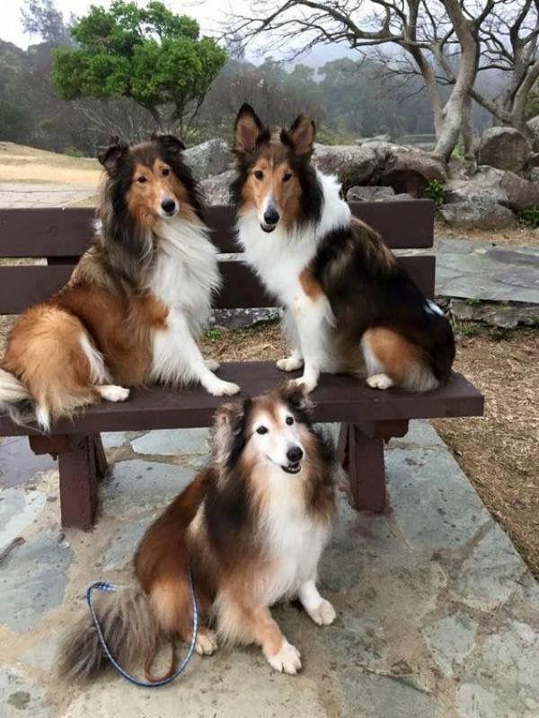 Hunde Bilder Witzig Für Facebook - Hunde Bilder Witzig Für Facebook