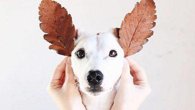 Hunde Bilder Witzig Kostenlos Herunterladen 390x220 - Hunde Bilder Witzig Kostenlos Herunterladen