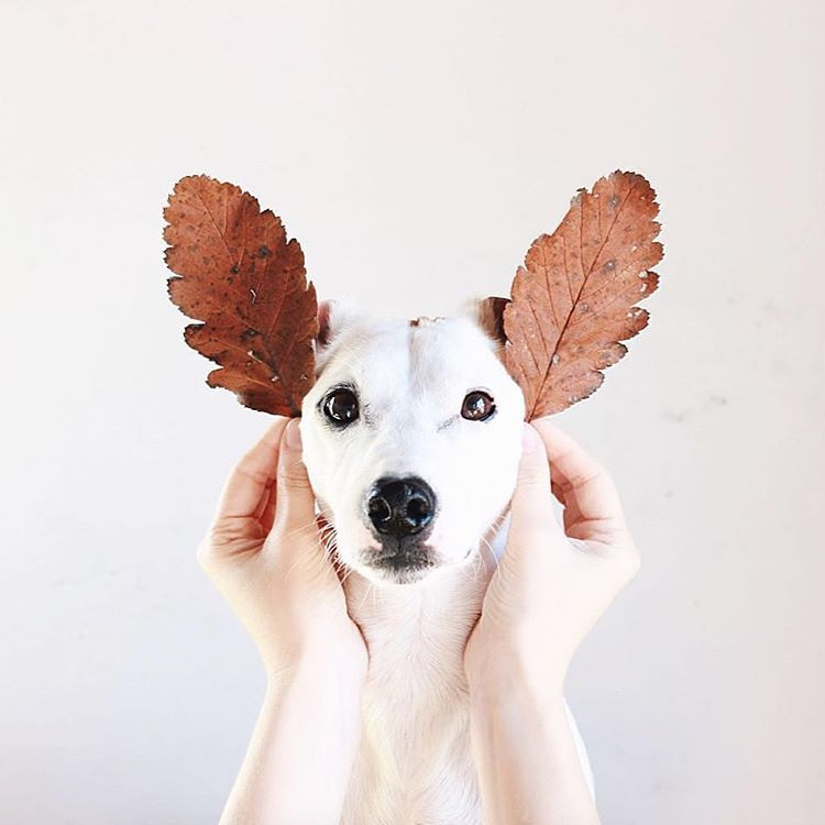 Hunde Bilder Witzig Kostenlos Herunterladen - Hunde Bilder Witzig Kostenlos Herunterladen