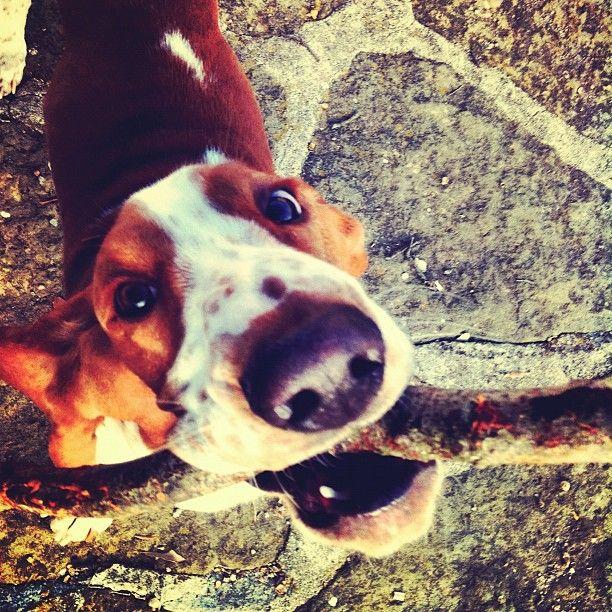 Hunde Bilder Witzig Kostenlos - Hunde Bilder Witzig Kostenlos
