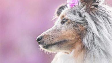 Hunde Bilder Zum Ausdrucken Für Whatsapp 390x220 - Hunde Bilder Zum Ausdrucken Für Whatsapp