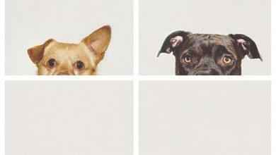 Hunde Bilder Zum Ausdrucken Kostenlos 390x220 - Hunde Bilder Zum Ausdrucken Kostenlos