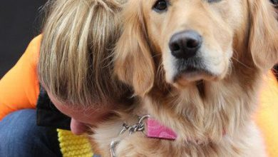 Hunde Bilder Zum Ausdrucken Kostenlos Für Facebook 390x220 - Hunde Bilder Zum Ausdrucken Kostenlos Für Facebook