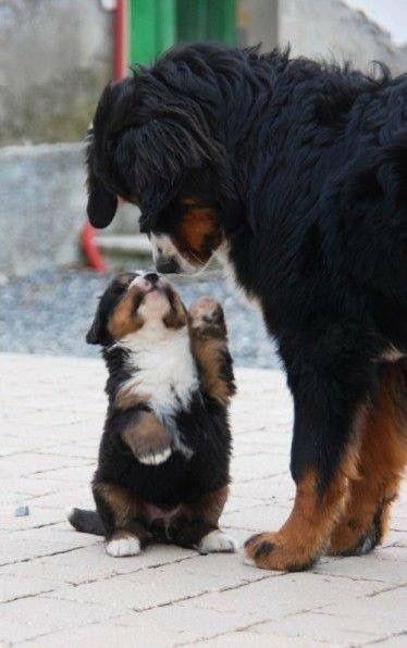 Hunde Bilder Zum Ausdrucken Kostenlos Herunterladen - Hunde Bilder Zum Ausdrucken Kostenlos Herunterladen