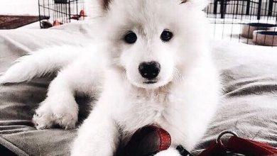 Hunde Bilder Zum Ausdrucken Kostenlos Kostenlos 390x220 - Hunde Bilder Zum Ausdrucken Kostenlos Kostenlos