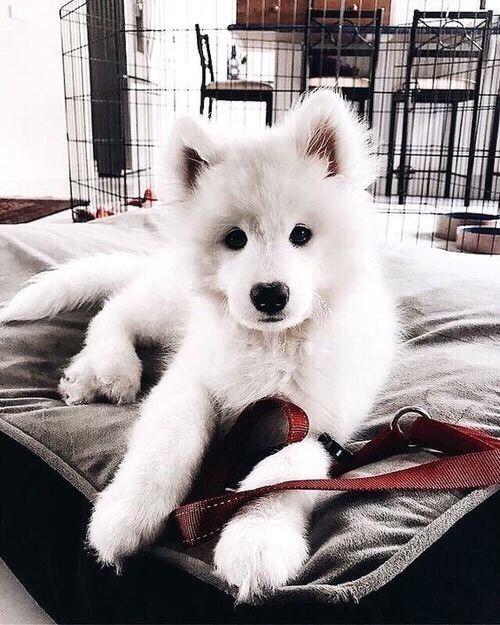 Hunde Bilder Zum Ausdrucken Kostenlos Kostenlos - Hunde Bilder Zum Ausdrucken Kostenlos Kostenlos
