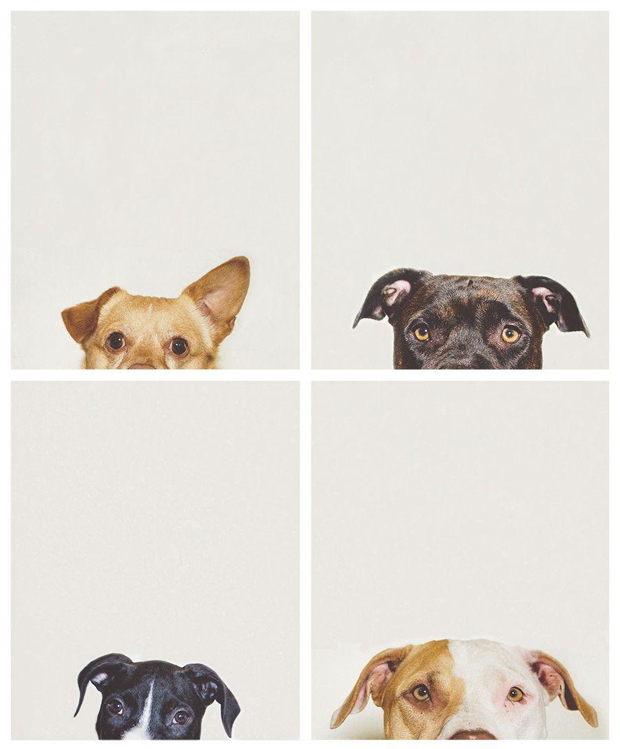 owalo design kostenlos hunde bilder zum drucken