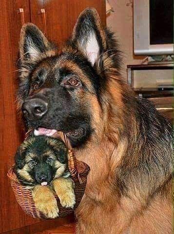 Hunde Bilder Zum Drucken Für Facebook - Hunde Bilder Zum Drucken Für Facebook