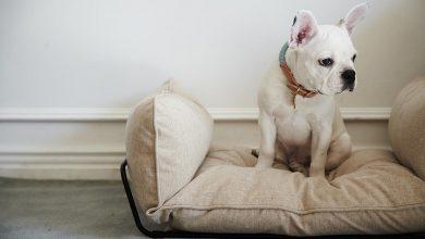 Hunde Bilder Zum Drucken Für Whatsapp 390x220 - Hunde Bilder Zum Drucken Für Whatsapp