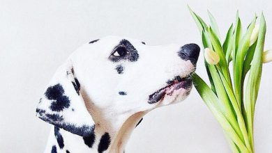 Hunde Bilder Zum Drucken Kostenlos 390x220 - Hunde Bilder Zum Drucken Kostenlos