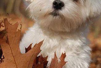 Hunde Bilder Zum Drucken Kostenlos Herunterladen 328x220 - Hunde Bilder Zum Drucken Kostenlos Herunterladen