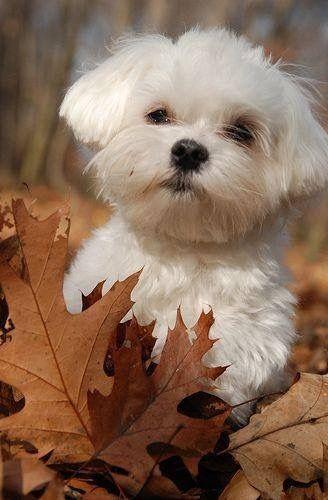 Hunde Bilder Zum Drucken Kostenlos Herunterladen - Hunde Bilder Zum Drucken Kostenlos Herunterladen