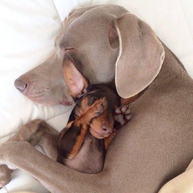 Hunde Für Kinder - Hunde Für Kinder