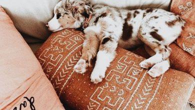 Hunde Fotos 390x220 - Hunde Fotos