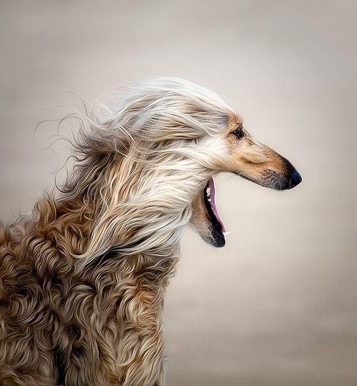 Hunde Fotos Welpen - Hunde Fotos Welpen