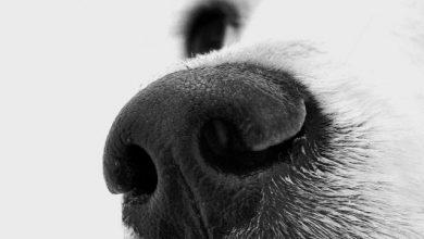 Hunde Große Rassen 390x220 - Hunde Große Rassen