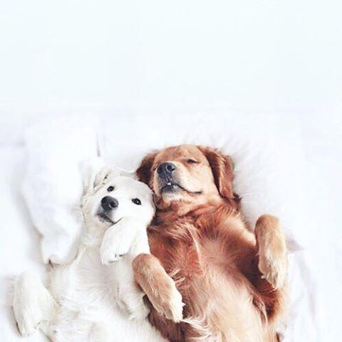 Hunde Informationen - Hunde Informationen