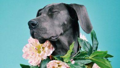 Hunde Liste Mit Bildern 390x220 - Hunde Liste Mit Bildern