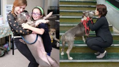 Hunde Lustige Bilder 390x220 - Hunde Lustige Bilder