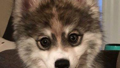 Hunde Mischlinge Bilder Für Facebook 390x220 - Hunde Mischlinge Bilder Für Facebook