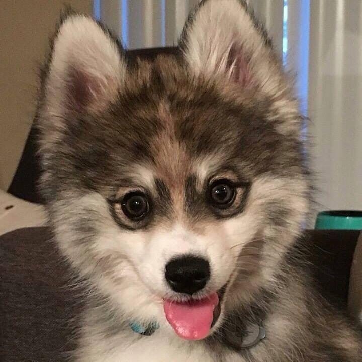 Hunde Mischlinge Bilder Für Facebook - Hunde Mischlinge Bilder Für Facebook