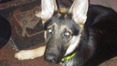 Hunde Mischlinge Bilder Kostenlos Herunterladen 390x220 - Hunde Mischlinge Bilder Kostenlos Herunterladen