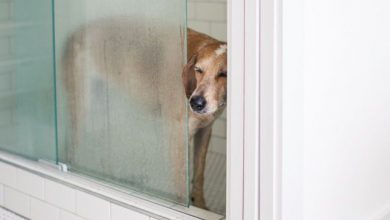 Hunde Mit Bild 390x220 - Hunde Mit Bild