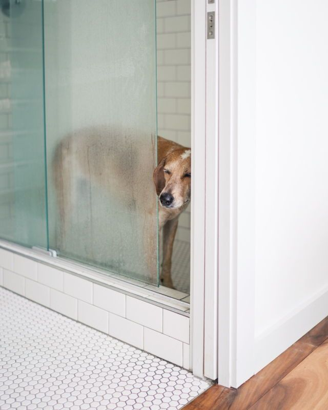 Hunde Mit Bild - Hunde Mit Bild