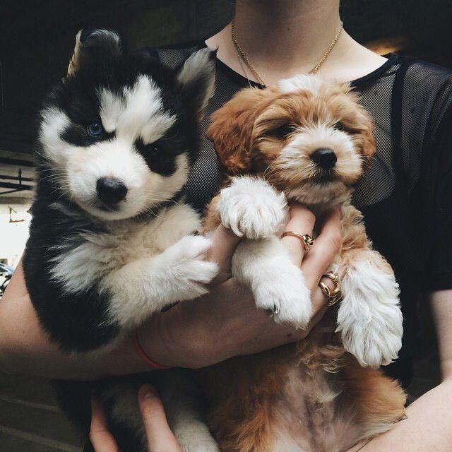 Hunde Test - Hunde Test
