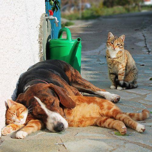 Hunde Verschiedene Rassen - Hunde Verschiedene Rassen