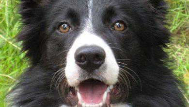 Hunde Von A Bis Z Mit Bild 390x220 - Hunde Von A Bis Z Mit Bild