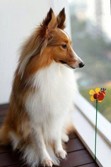Hunde Weihnachtsbilder Für Facebook - Hunde Weihnachtsbilder Für Facebook