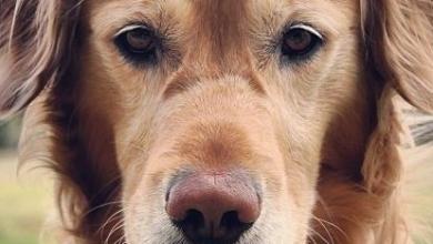 Hunde Weihnachtsbilder Für Whatsapp 390x220 - Hunde Weihnachtsbilder Für Whatsapp