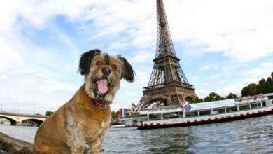Hunde Welpen Bilder Zum Ausdrucken Kostenlos 390x220 - Hunde Welpen Bilder Zum Ausdrucken Kostenlos