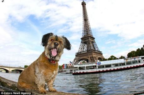 Hunde Welpen Bilder Zum Ausdrucken Kostenlos - Hunde Welpen Bilder Zum Ausdrucken Kostenlos