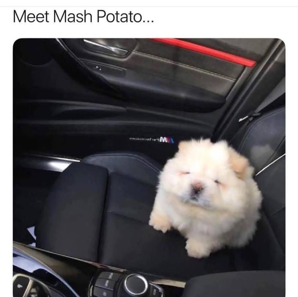 Hunde Witze Bilder Für Facebook - Hunde Witze Bilder Für Facebook