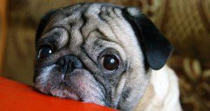 Hunde Witzige Bilder Für Whatsapp 300x158 - Hunde Witzige Bilder Für Whatsapp