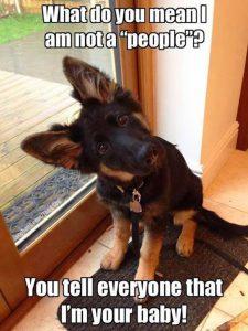 Hunde Witzige Bilder Kostenlos Herunterladen 225x300 - Hunde Witzige Bilder Kostenlos Herunterladen