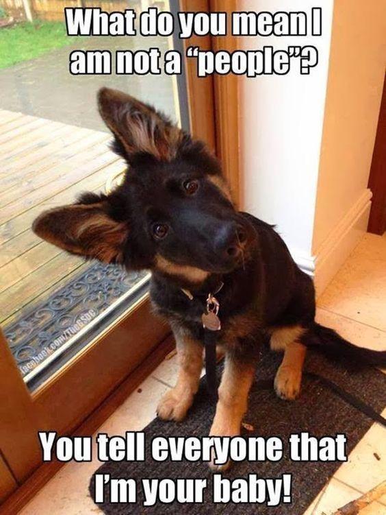 Hunde Witzige Bilder Kostenlos Herunterladen - Hunde Witzige Bilder Kostenlos Herunterladen