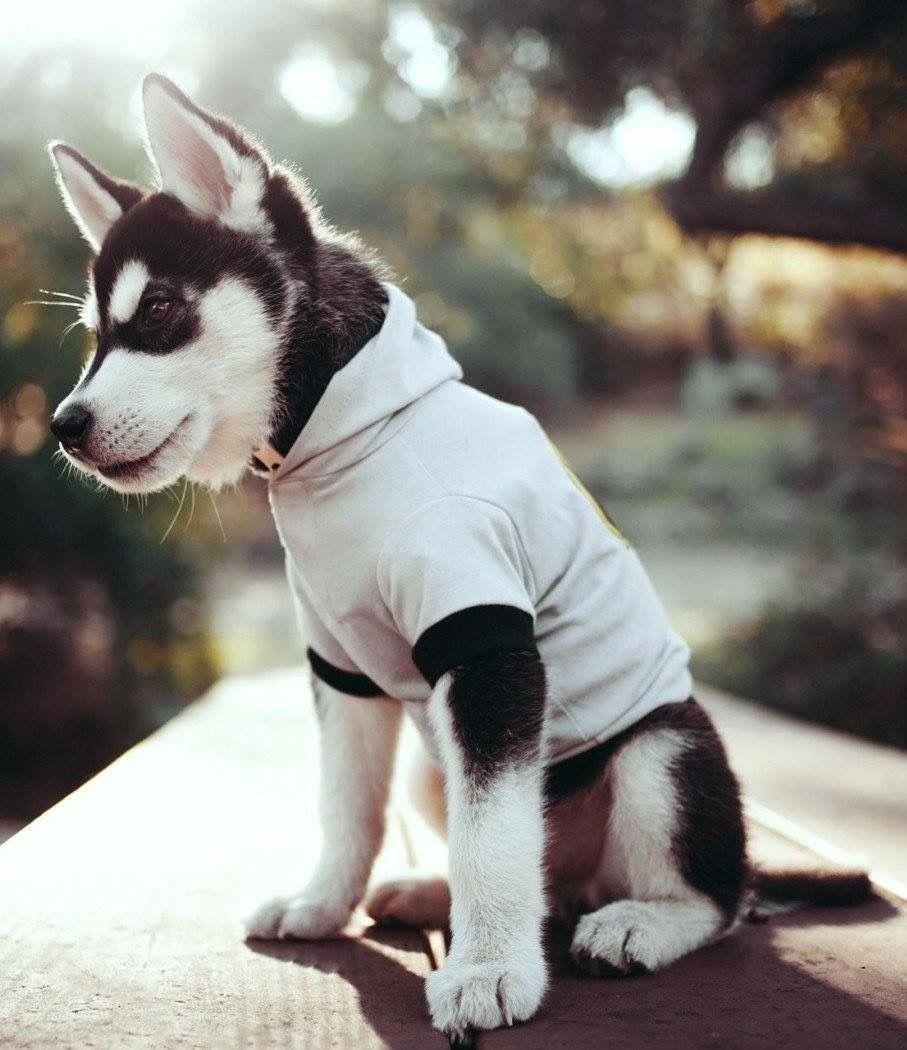 Hunde Witzige Bilder - Hunde Witzige Bilder