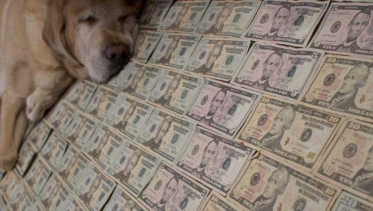 Hundebabys Bilder Kostenlos Herunterladen - Hundebabys Bilder Kostenlos Herunterladen