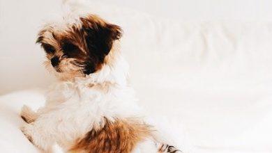 Hundebilder 390x220 - Hundebilder